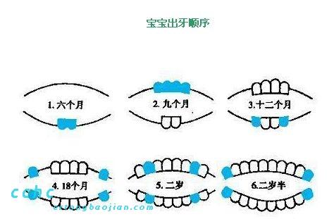 【155期】儿童牙齿发育及换牙期注意事项